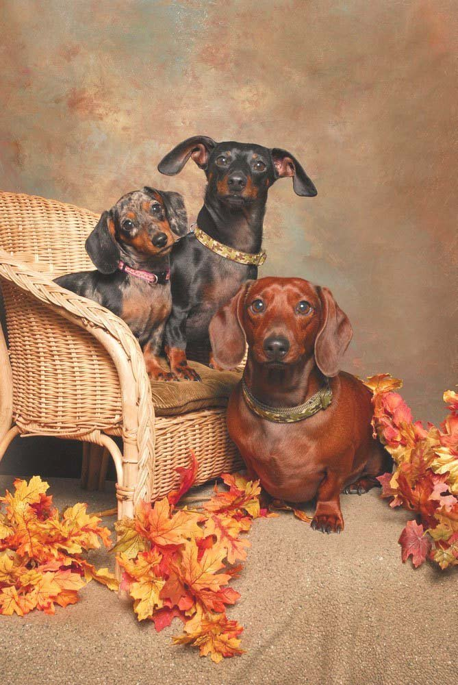 Happy Dachshund family