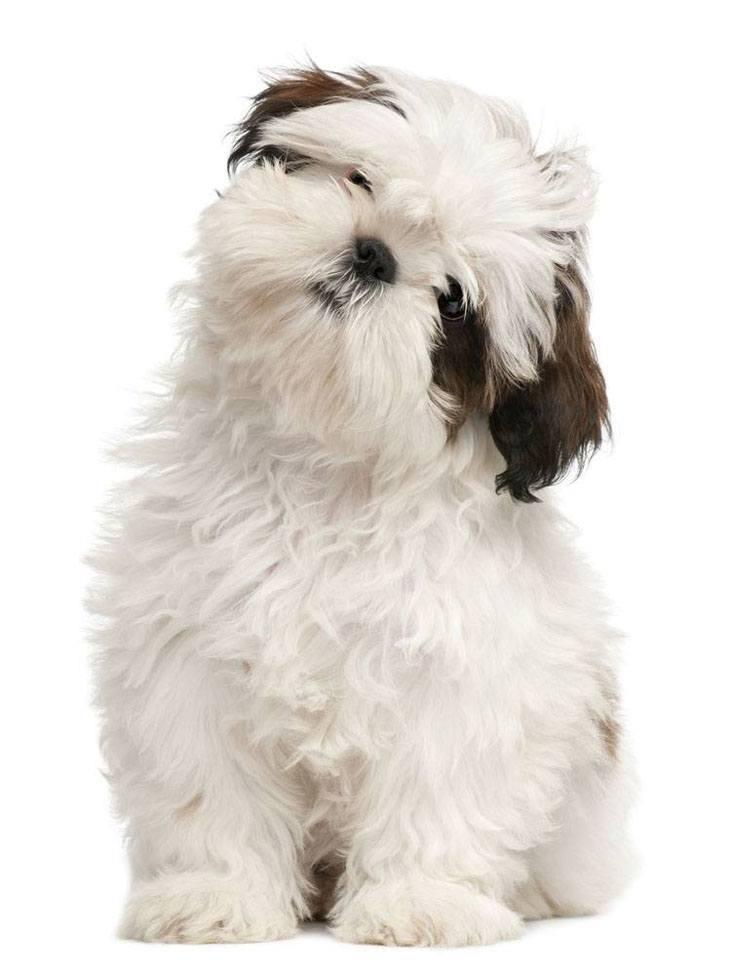 Cute curious puppy
