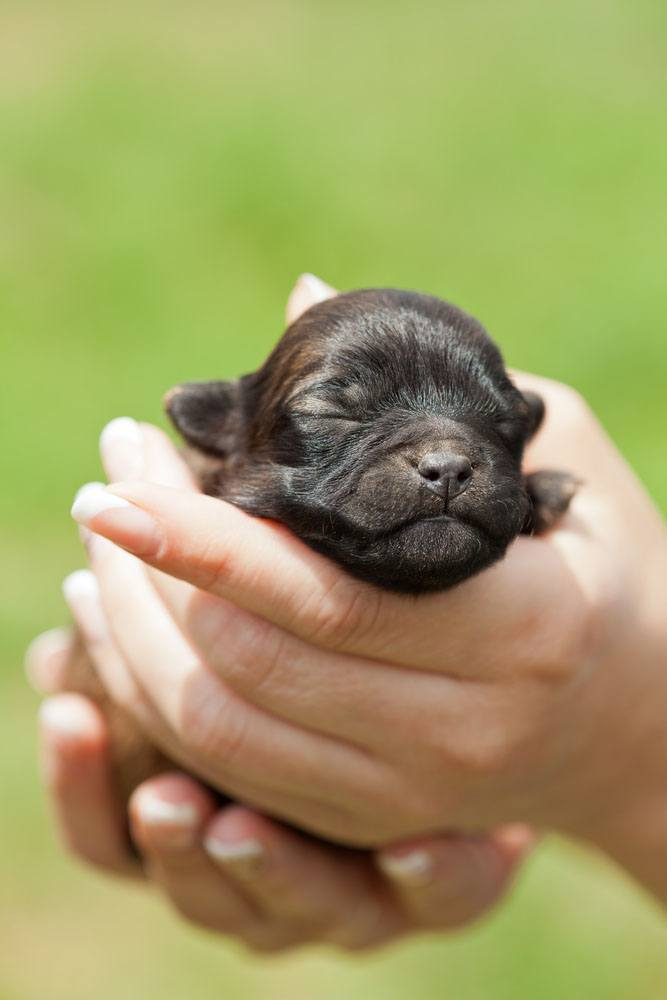 Newborn puppy waiting for the perfect cute dog name