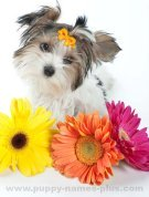 Colorful puppy