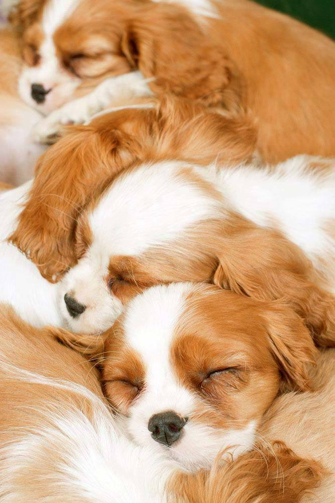 Puppies taking a cute nap as a family