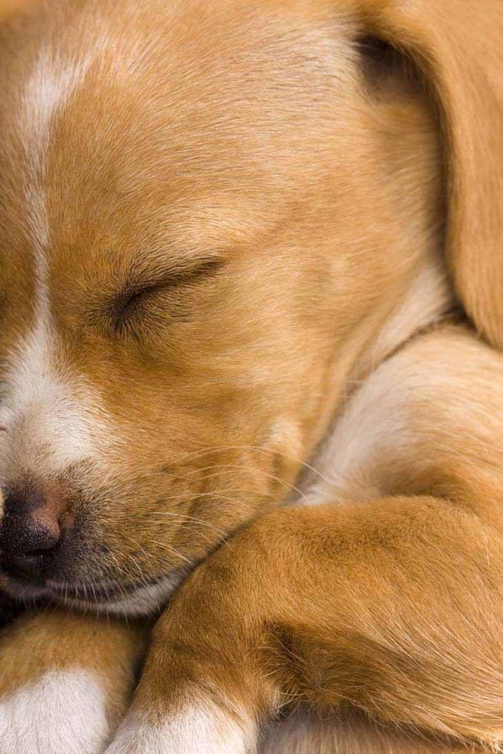 Beautiful puppy taking a nap