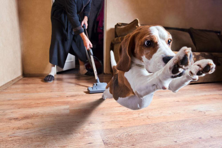 Dog running from the vacuum
