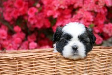 Puppy waiting for a cute dog name