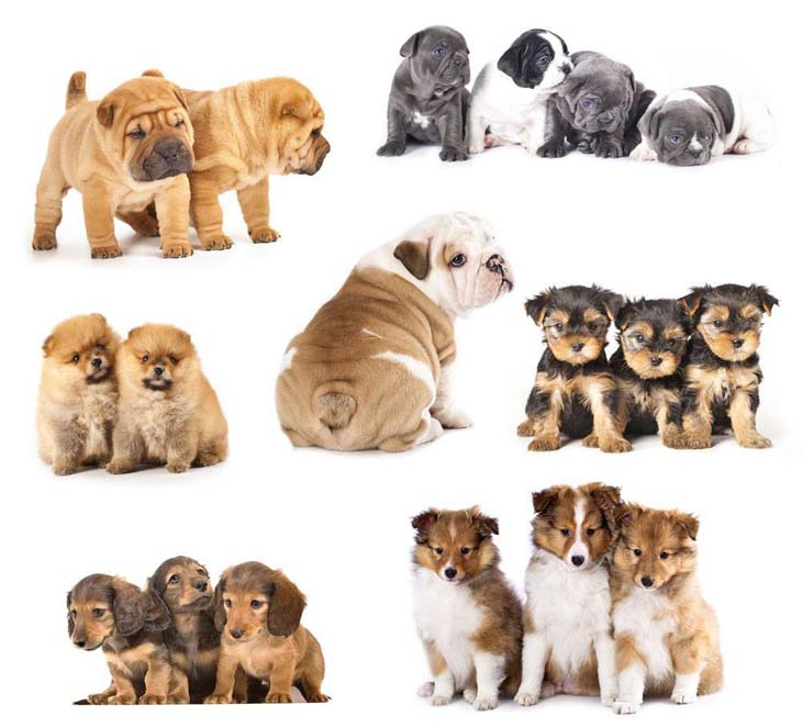 These puppies are looking for cute dog names.