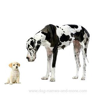 Really big and small dog buddies