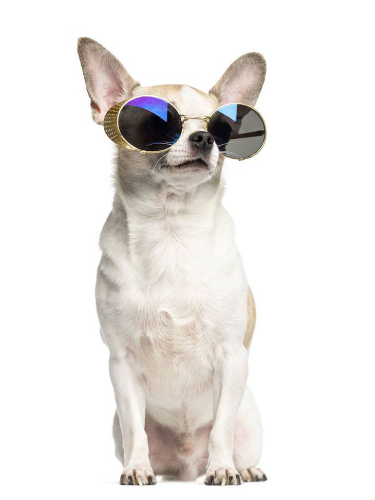 Puppy too cool to be on Pinterest