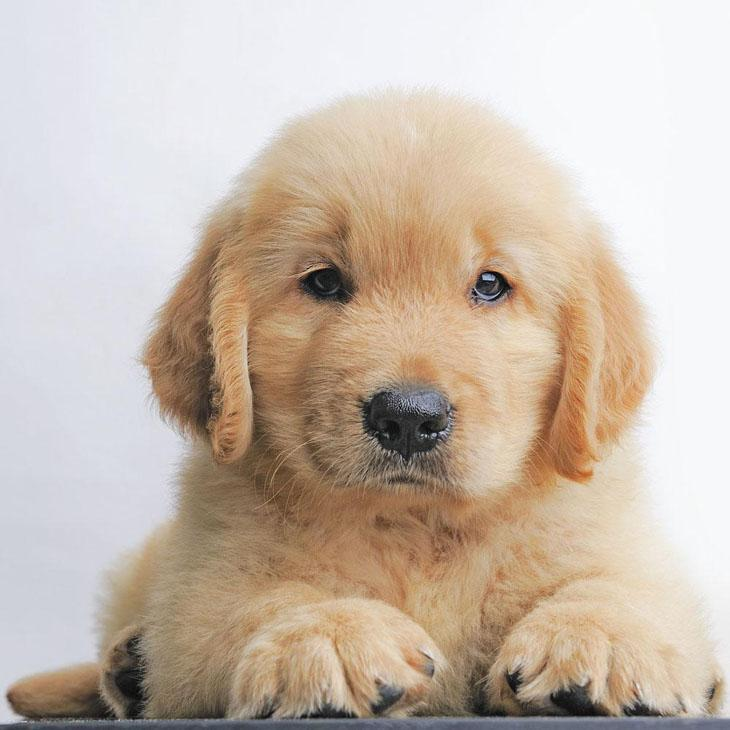 Cute puppy chillin out