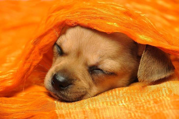 Puppy catching a nap