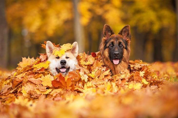 Dogs loving the fall colors