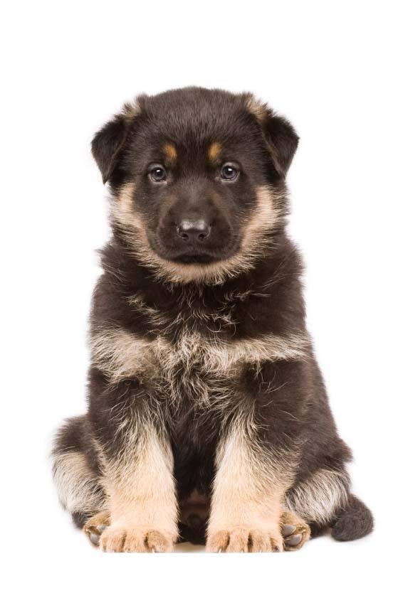 Good Dog Names For German Shepherds Male