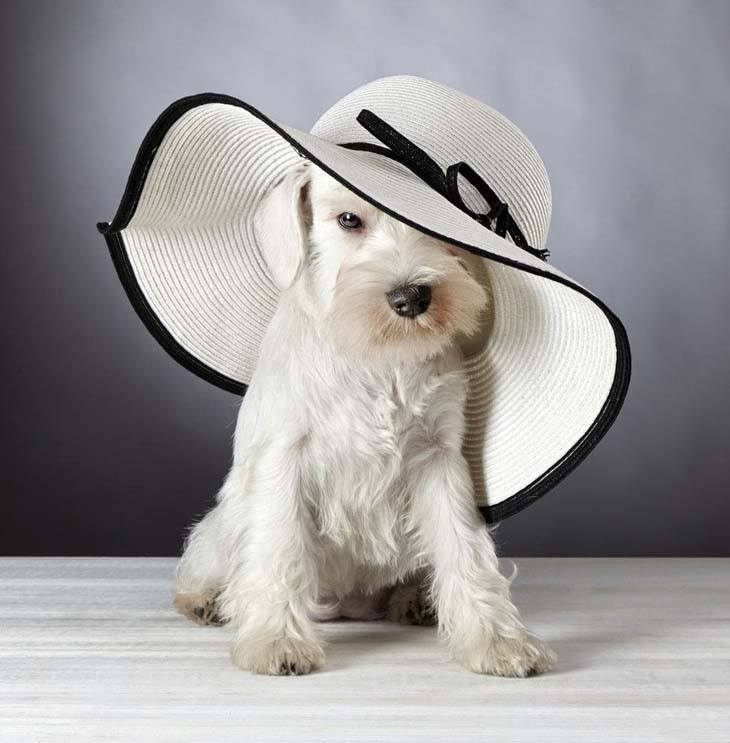 Fashionable puppy
