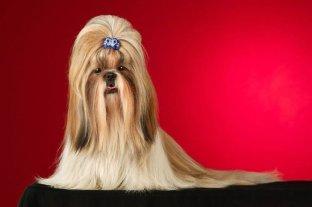 Beautifully groomed dog