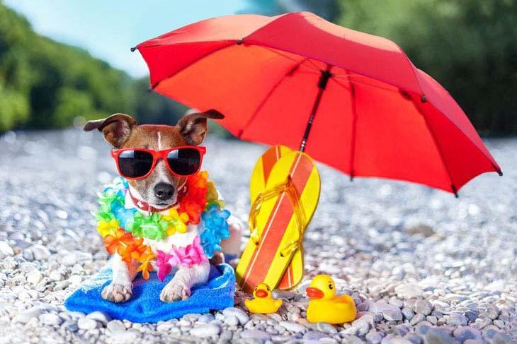 Dog enjoying a day at the beach