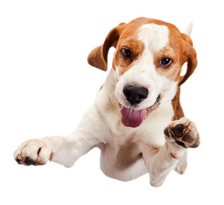 Airborne Beagle