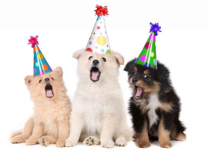 Dog choir singing Happy Birthday