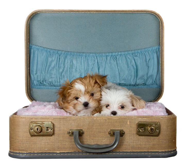 Shih tzu names cute male female names for your pup for Small dogs on airplanes