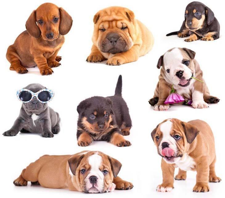 Puppies on parade!