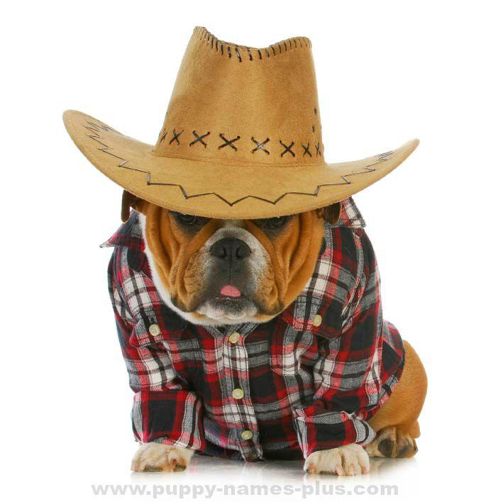 Redneck hat wearing dog