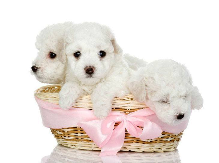 Cute puppies can't wait to get out and play