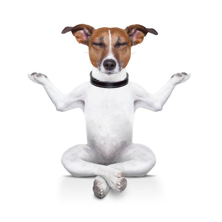 Meditation dog