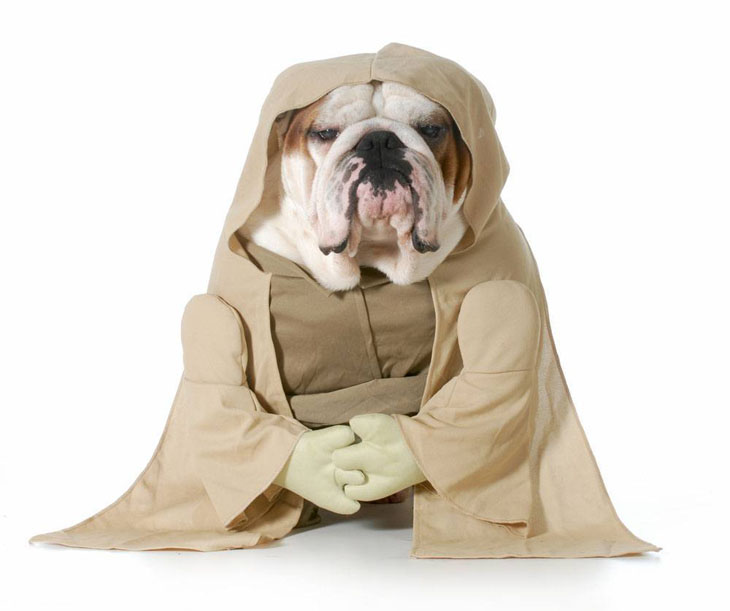 Yoda dog wannabe