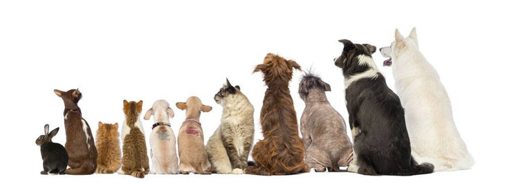Dogs, cats and rabbits watching Animal Planet