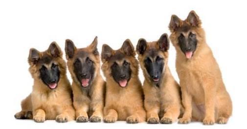 Leaning puppy cuteness