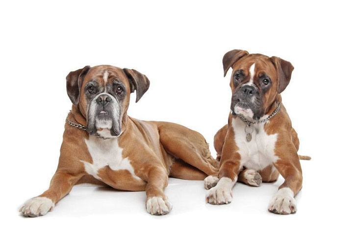 Boxers taking a rest before dinnertime
