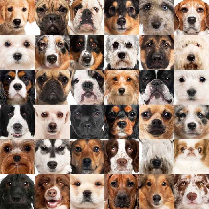 Dog picture collage