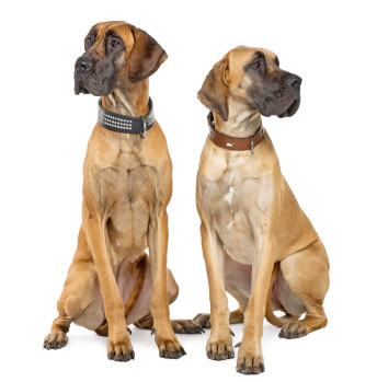 Good Names For Loyal Dogs