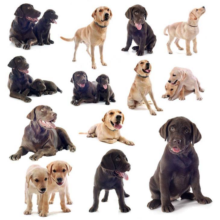 Poular Names Dogs