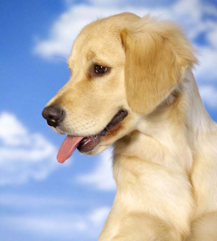 Puppy Names For Male Brown Dogs