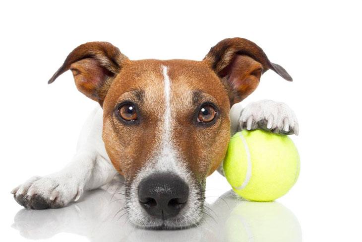 Please throw my ball!