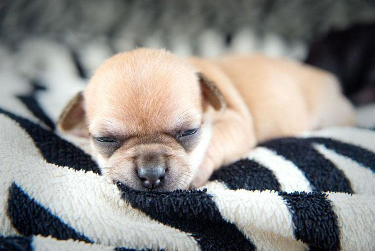 Puppy snoozing