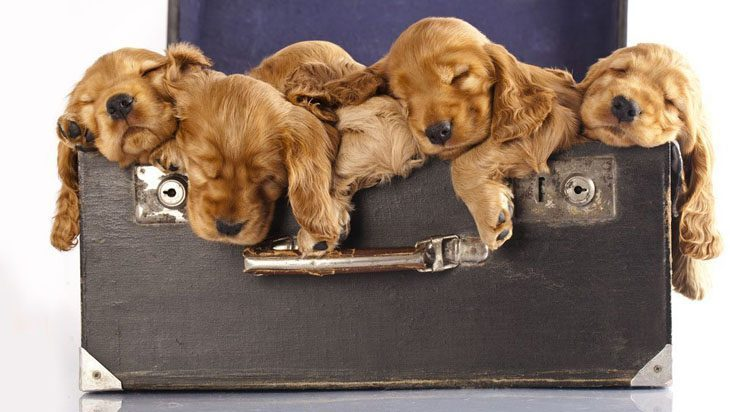 Puppy family naptime