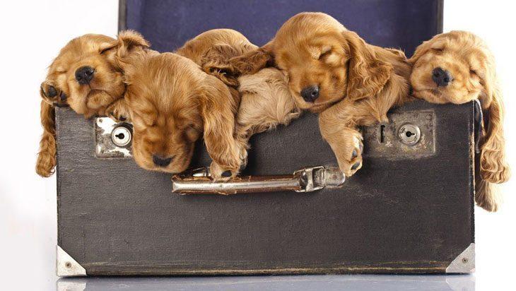 Puppy family naptime