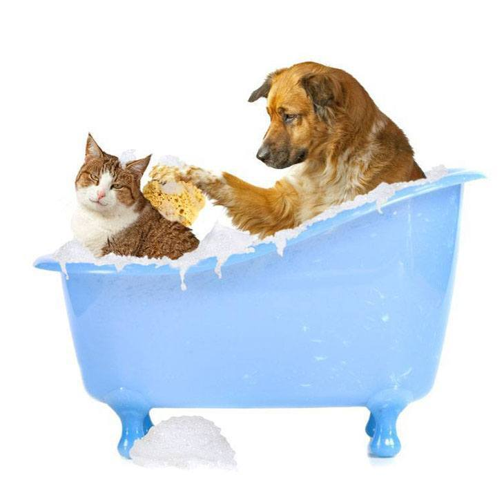 Dog giving cat a bath