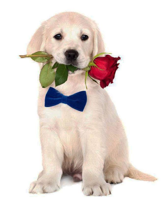 Romantic puppy