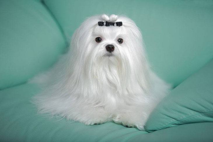 Beautiful long haired dog