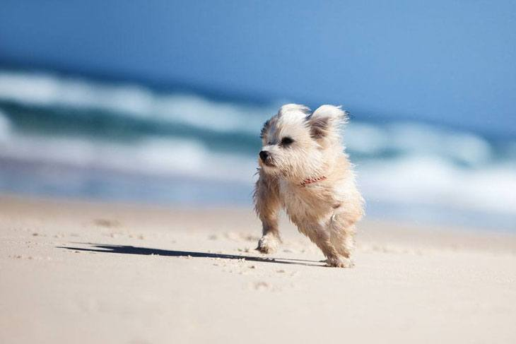 Puppy enjoying a day at the beach