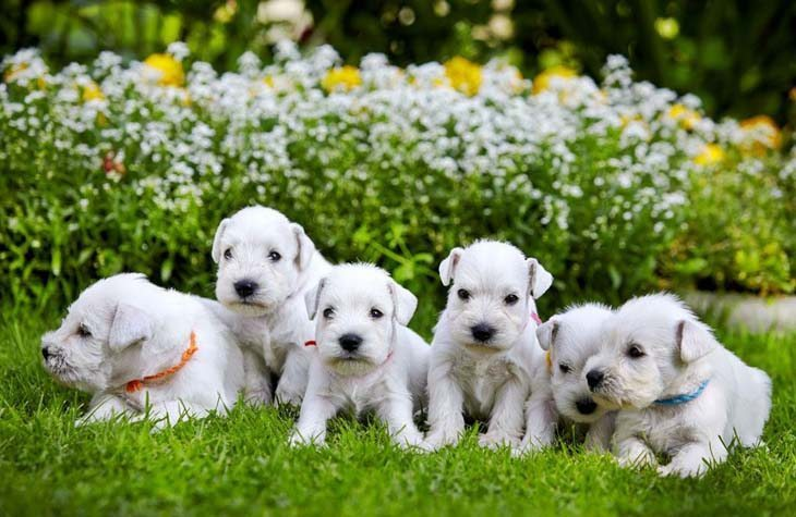 Puppies ready to play