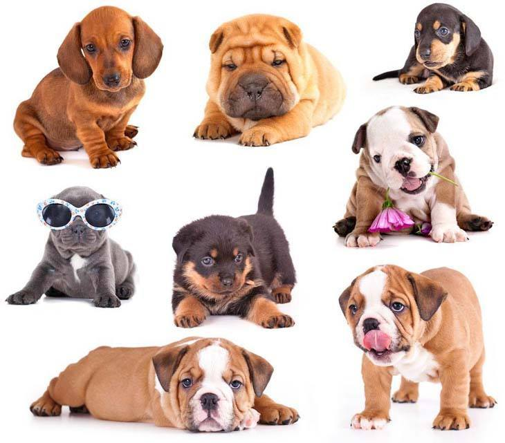 Cute puppy collage