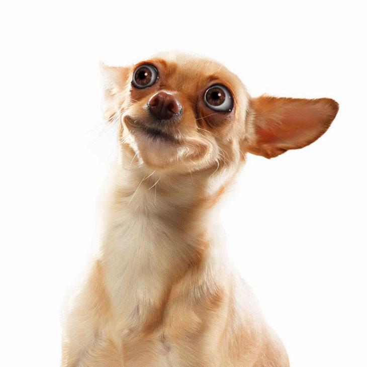 Doubting dog