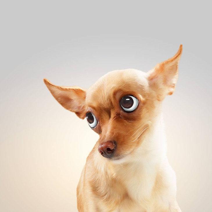 Distrustful dog